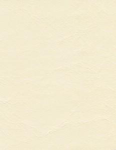 Zander Cream 3106